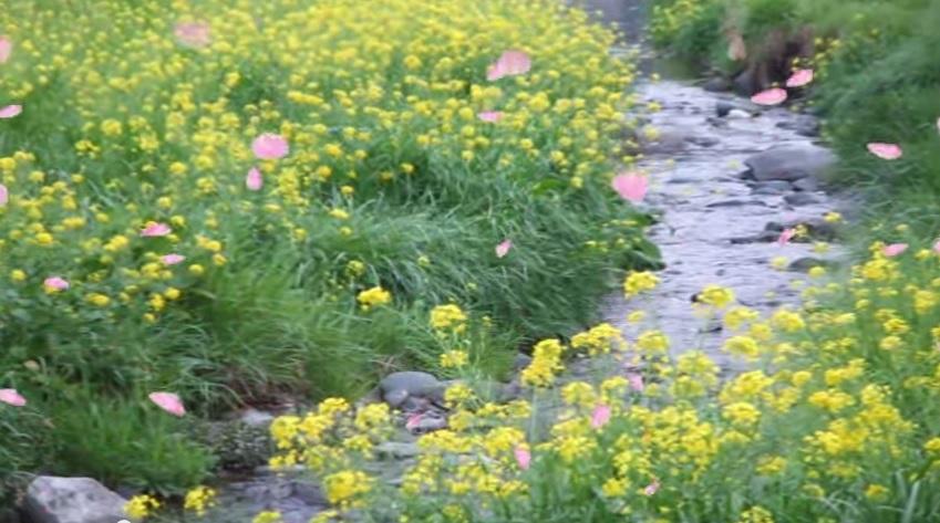 2015-7-9春の小川