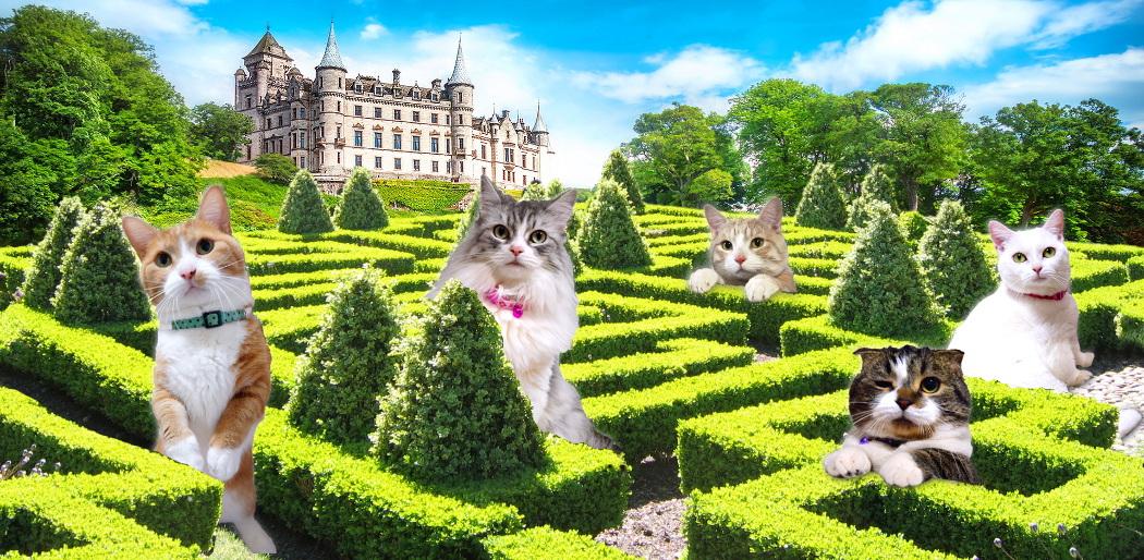 dunrobin-castle201507header2.jpg