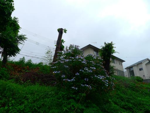 20150619・雨の日のささやき10