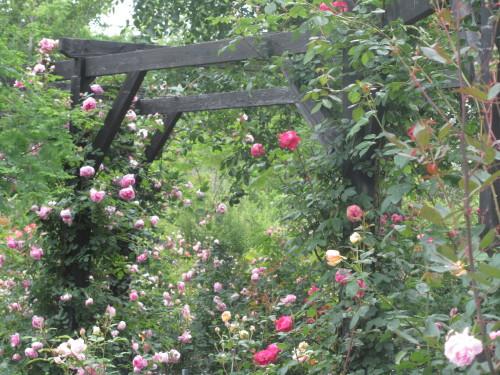 薔薇0001_5