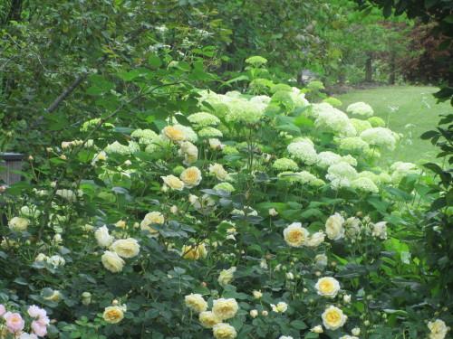 薔薇0001_6