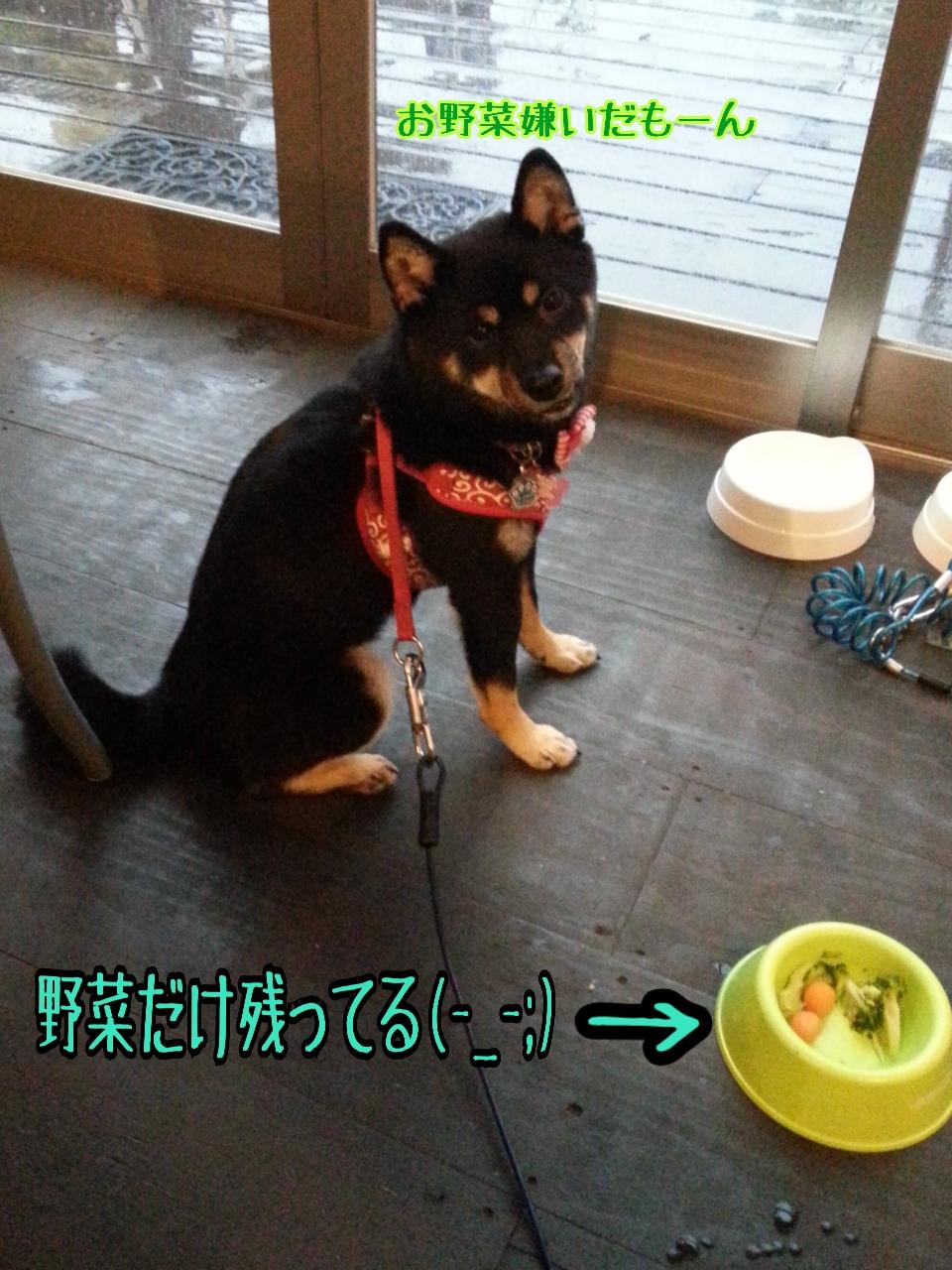 20150704-野菜嫌い