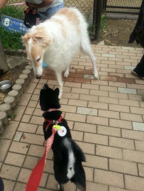 高坂犬①_deco