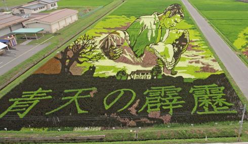 田舎館村田んぼアート2015(1)-8