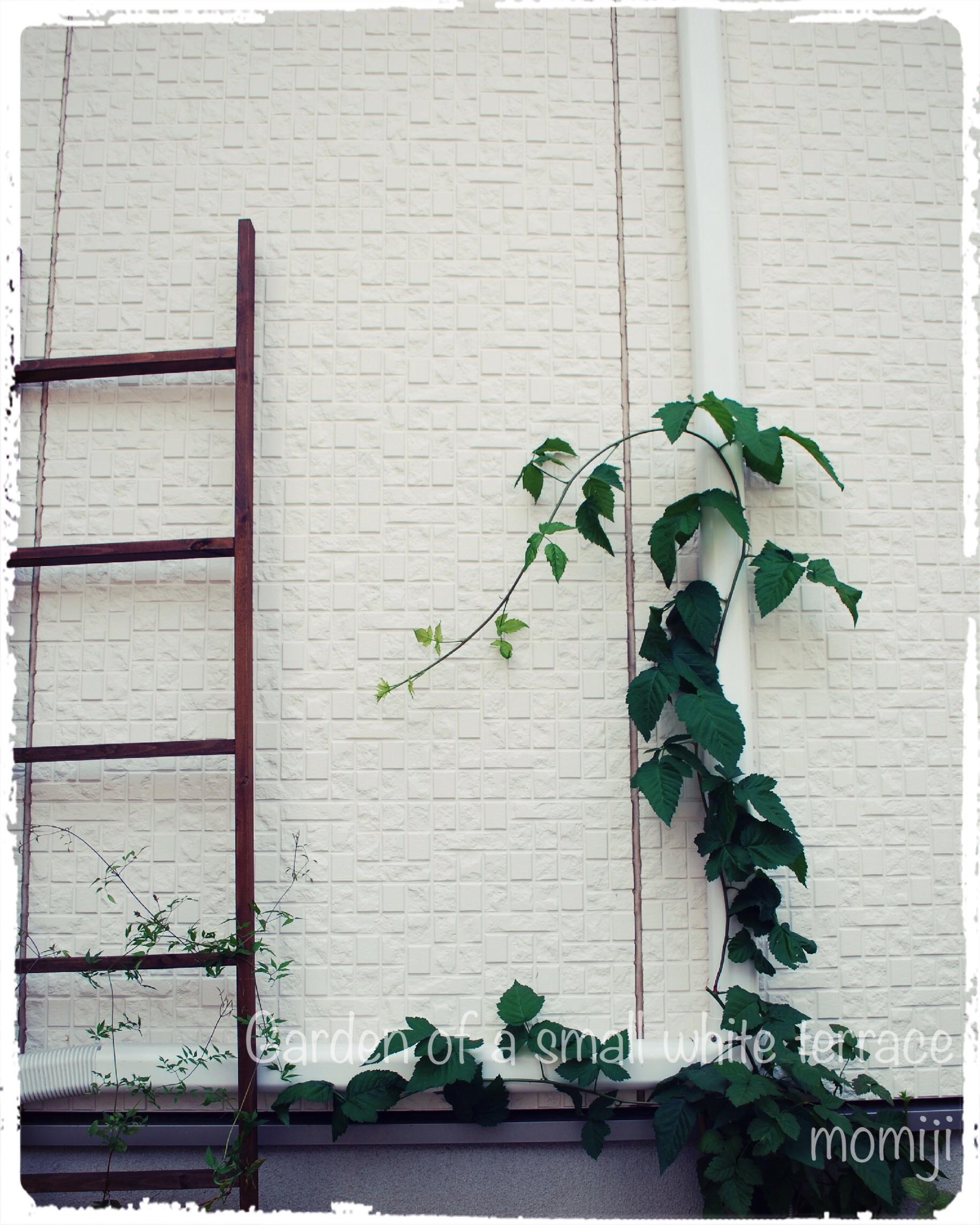日陰花壇 ブラックベリー