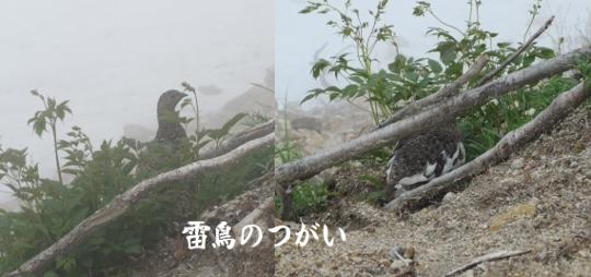 7月2日唐松岳登山記録 (2) (540x254)