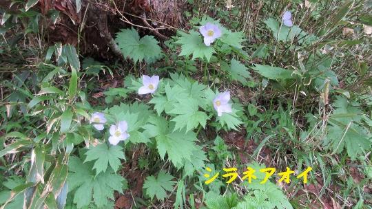 7月2日唐松岳登山記録 (3) (540x304)