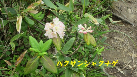 7月2日唐松岳登山記録 (4) (540x304)