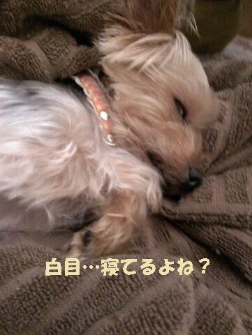 小梅 寝る5