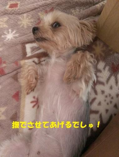IMAG2157.jpg