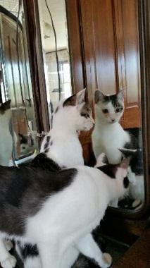 よー鏡11