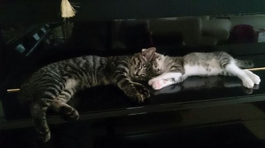 ロビン&ロッタ2