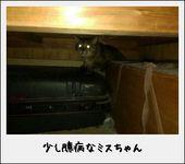 ミックス猫