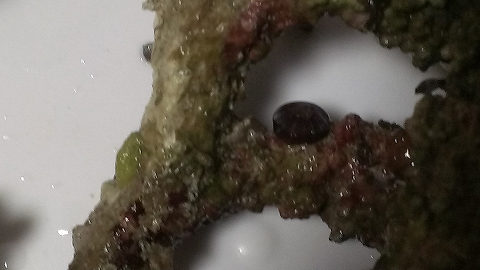 何だこれ?サンゴ?20150704_01