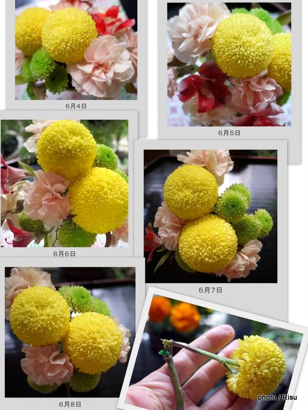 日比谷花壇 和室に合うアレンジメント 経過観察