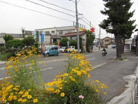美合新町の松並木