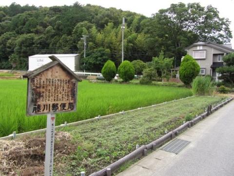 藤川宿むらさき麦の畑
