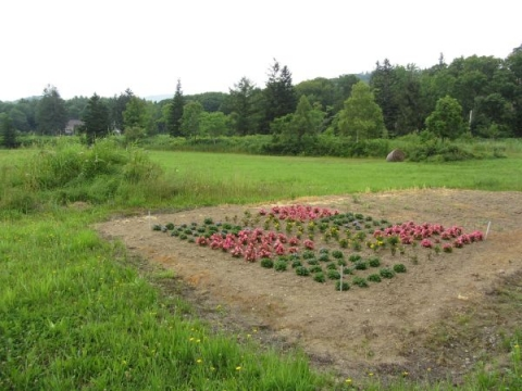 添牛内コミュニティセンターの花壇