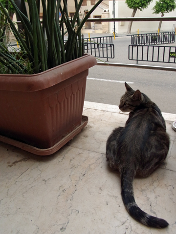 2015 egyptiancat 03