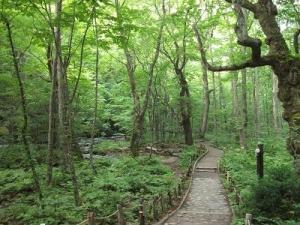 150730森林浴