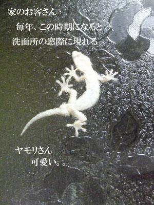2015-6gatsu-26nichi-027.jpg