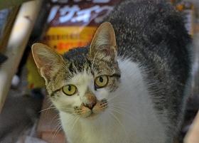 2015709木曽ネコ1
