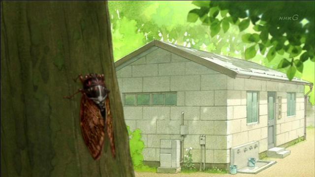 semi セミ 蝉