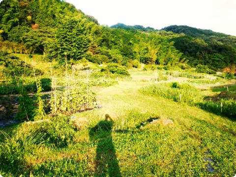 アスパラ種蒔き1