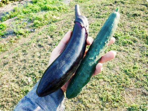 アスパラ種蒔き5