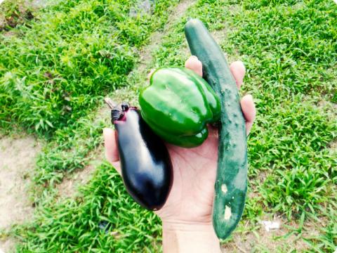 6月10日の収穫
