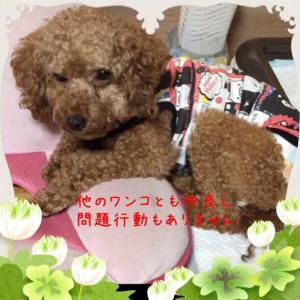 fc2blog_2015071501232541c.jpg