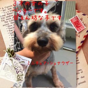 fc2blog_2015071519432926b.jpg