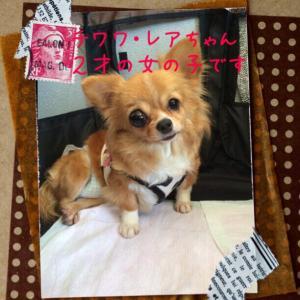 fc2blog_20150722213743041.jpg