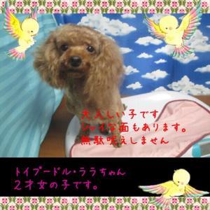 fc2blog_20150725144340894.jpg