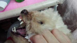 嫌嫌 歯磨き7