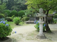 雨の季節の花見4
