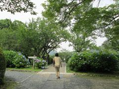 雨の季節の花見7