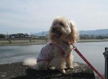 日光浴な散歩2