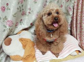 my sweet Rosekyun