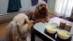 昼下がりのおやつたいむ2