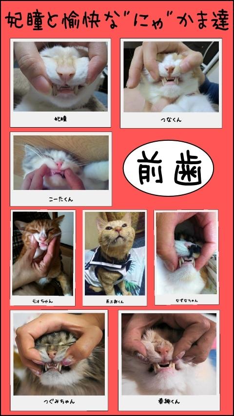 """""""前歯""""特集"""