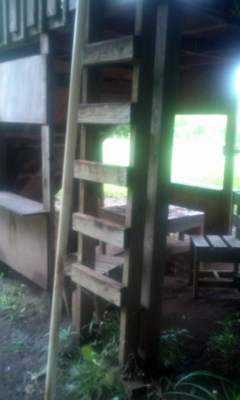 150702gonta-treehouse1.jpg