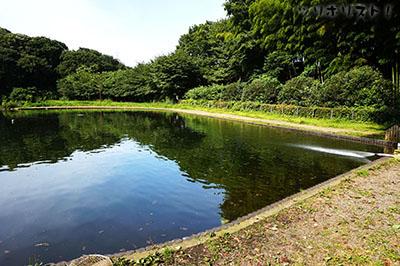 フィッシュオン王禅寺005a