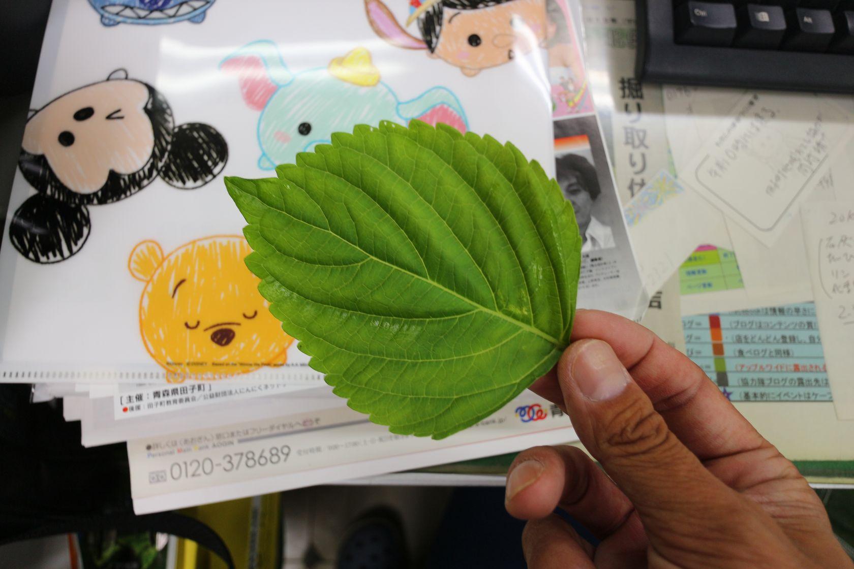 青森県田子町産エゴマ03