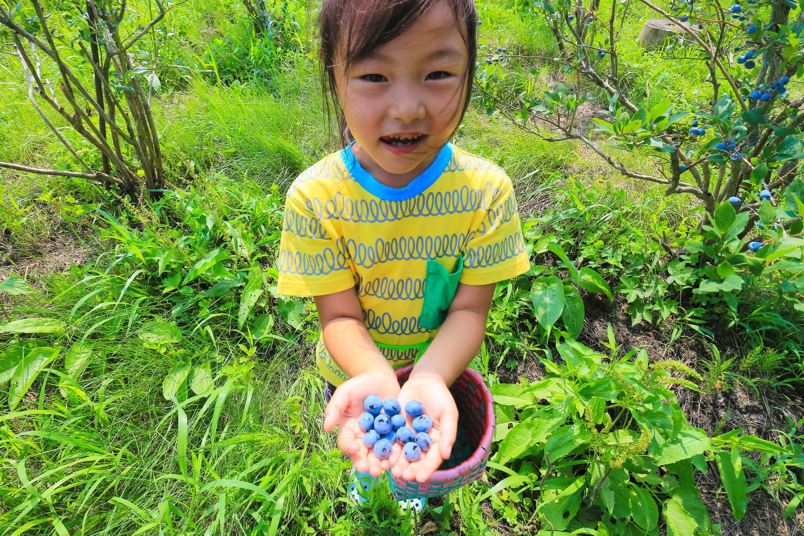 田子町地域おこし協力隊つっちーのブログ20150803_003
