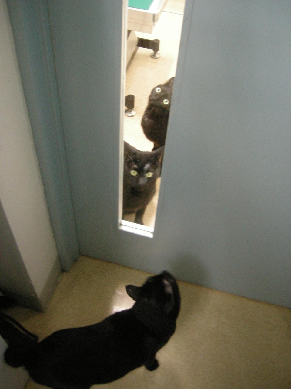 黒猫3の遭遇tate