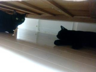 黒猫 花火