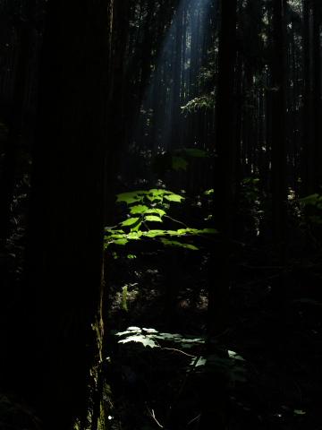 光の道筋2