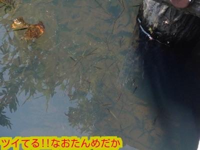20150802195352984.jpg