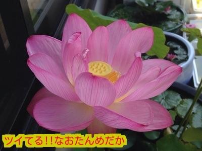 20150804185746a96.jpg